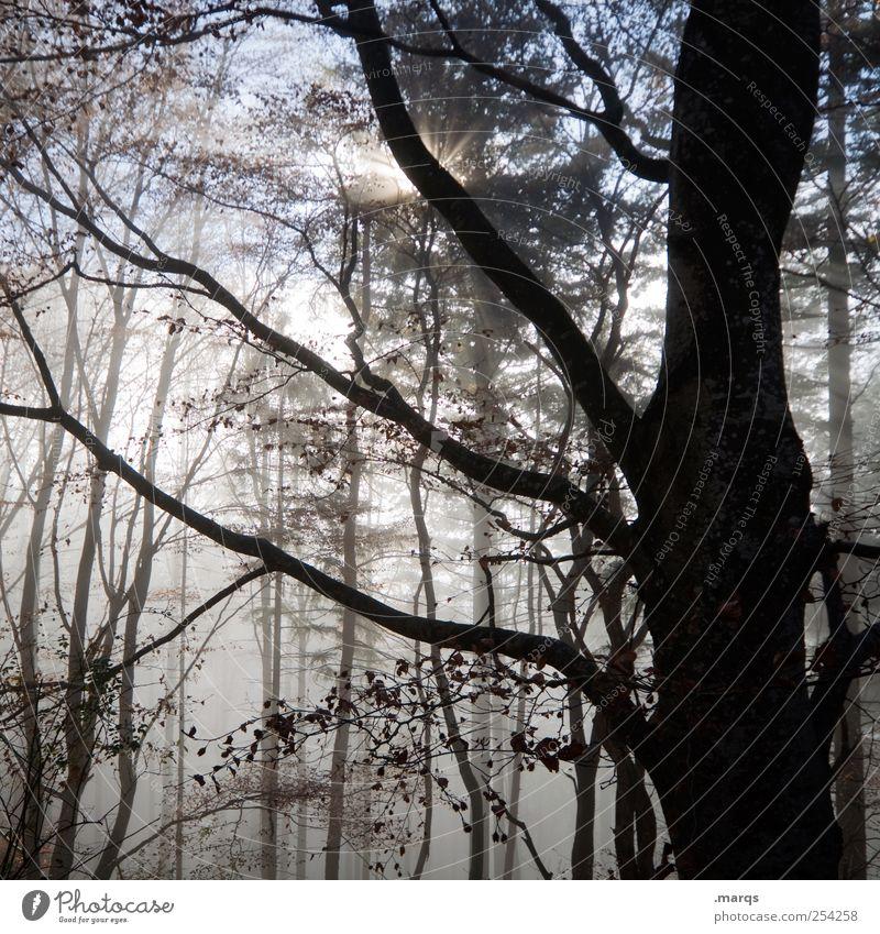 Fog Natur Baum Sonne Wald Umwelt Herbst Stimmung Nebel frisch Klima Ast Jahreszeiten Baumstamm gruselig mystisch Gefühle