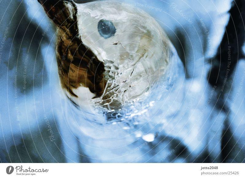 Das Eistier Eis Vogel Fisch Wal Delphine Lebensmittel
