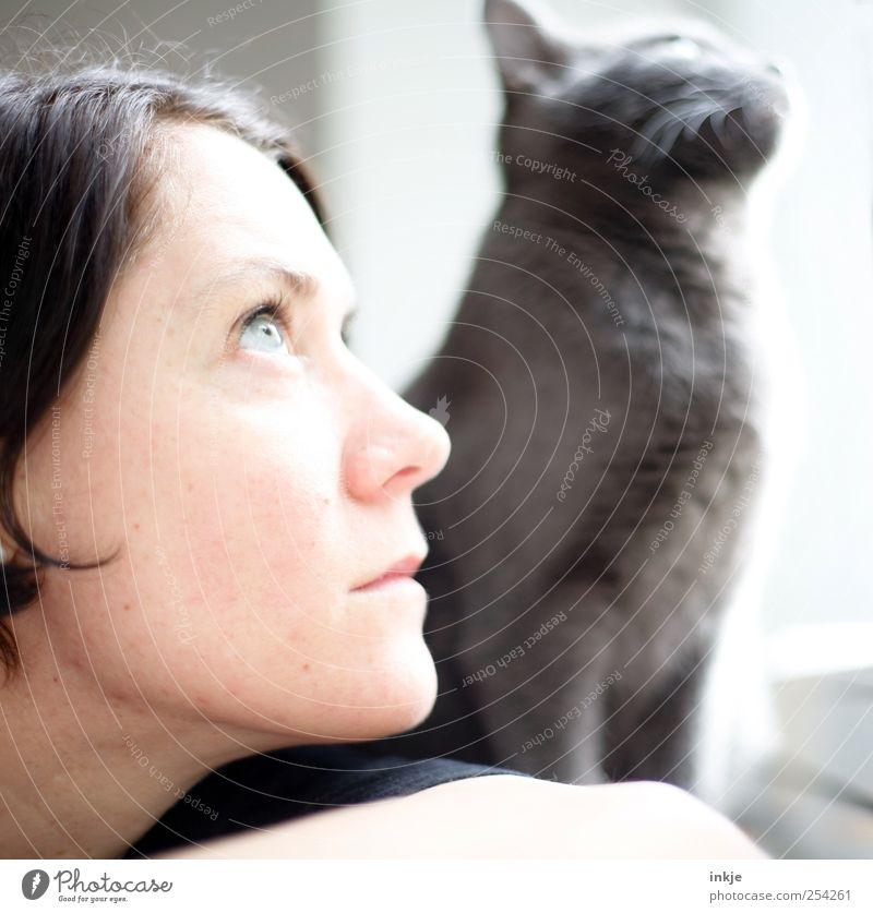 you and I Freizeit & Hobby Häusliches Leben Frau Erwachsene Paar Gesicht 1 Mensch Katze Tier beobachten Denken entdecken Blick träumen warten Zusammensein