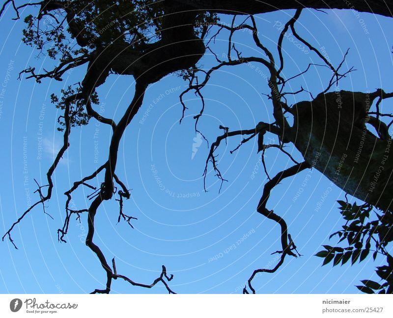 Baum gruselig dunkel Himmel Ast Zweig