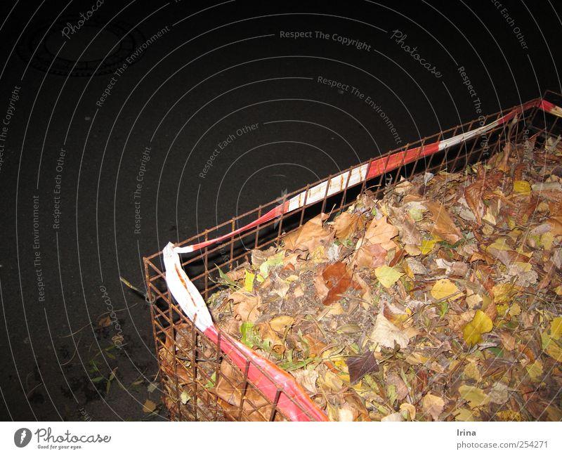 leaf trash Blatt Straße Bürgersteig trashig bizarr Kontrolle Barriere Draht gefangen Käfig Spießer Verkehrssicherheit Bieder zusammengebunden Drahtgitter