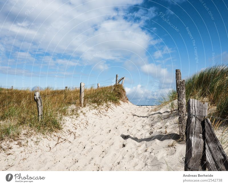 Strandzugang zur Ostsee Natur Ferien & Urlaub & Reisen Sommer schön Erholung ruhig Hintergrundbild Deutschland Sand frei Europa Düne Nationalitäten u. Ethnien