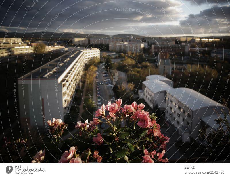 Sommer vorm Balkon Himmel Baum Blume Haus Wolken ruhig Ferne Straße Deutschland PKW Horizont Hochhaus Idylle Schönes Wetter Sträucher