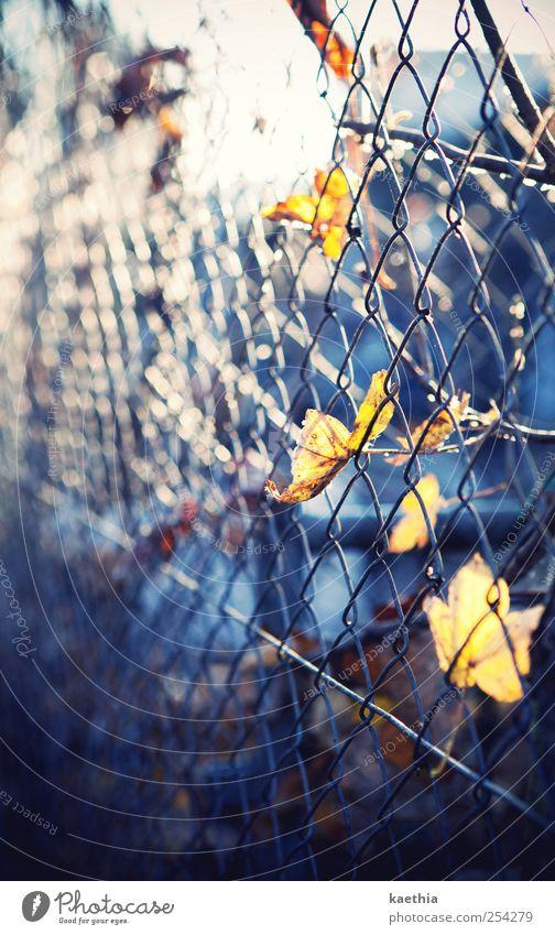 prison break Umwelt Pflanze Herbst Blatt Park Straße Metall Rost gelb Ahorn Ahornblatt Zaun gefangen hängen herbstlich Herbstlaub Oktober orange Lampe Baum