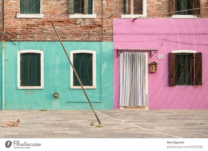 lonely cat Katze Ferien & Urlaub & Reisen alt grün Haus Tier ruhig Fenster Wand Gebäude Tourismus Mauer außergewöhnlich rosa Ausflug retro