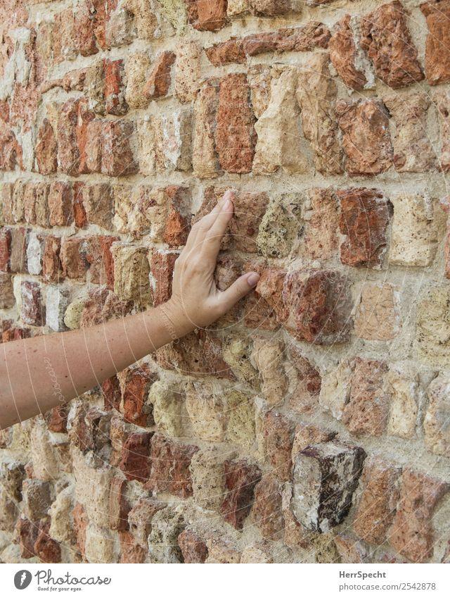 brick touch Frau Erwachsene Arme Hand 1 Mensch 18-30 Jahre Jugendliche 30-45 Jahre Altstadt Haus Gebäude Mauer Wand ästhetisch Neugier Erotik trocken feminin