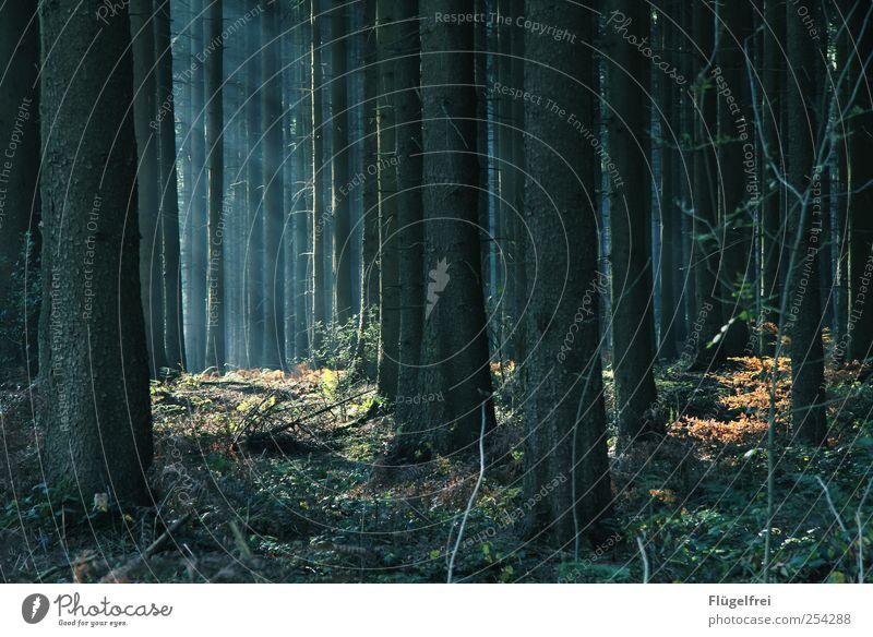 Das Reh hat seinen Einsatz verpasst ... Natur ruhig Wald Baum Pflanze Sträucher Holz Licht Herbst Menschenleer Märchen Idylle Farbfoto Gedeckte Farben