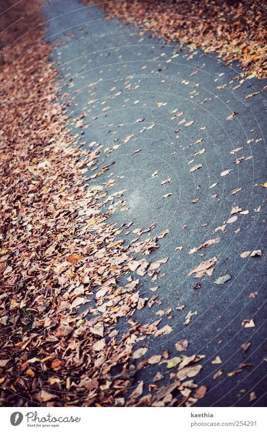 autumn way Natur Pflanze Erde Herbst Baum Park Straße Beton glänzend gehen gelb gold Ahorn Ahornblatt Blatt Verlauf Eiche Eichenblatt Buche Buchenblatt