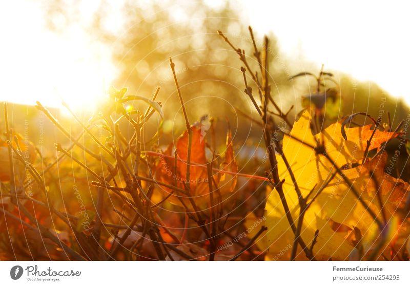Herbstsonne. Natur grün Blatt Winter Wald gelb Erholung Landschaft Garten Park braun gold Sträucher Dorf Landwirtschaft