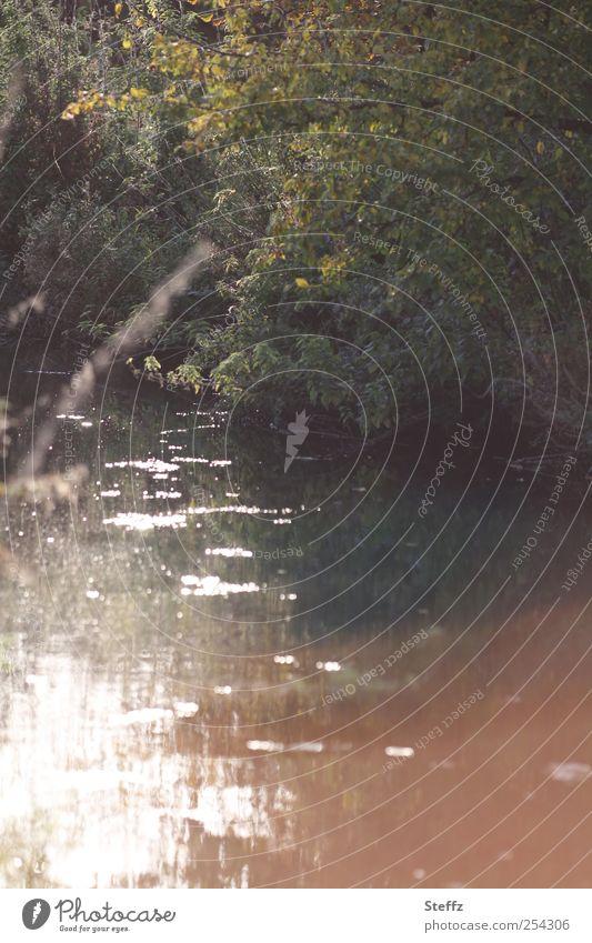 Licht-Impression am Fluß Natur Sommer Wasser Landschaft ruhig Stimmung Fluss Flussufer Meditation Wasseroberfläche fließen Lichtschein Lichtspiel Herbstbeginn