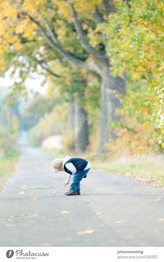 komm schon Mensch Kind Natur grün Baum Blatt Erholung Herbst Spielen Landschaft Junge Gras Kindheit blond maskulin Fröhlichkeit
