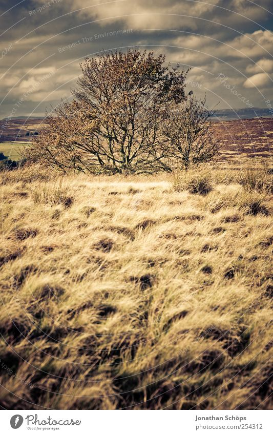 Peak District IV Umwelt Natur Landschaft Pflanze Himmel Horizont Klima Wetter Schönes Wetter Wind braun gold Zufriedenheit Freiheit Feld Außenaufnahme Wiese