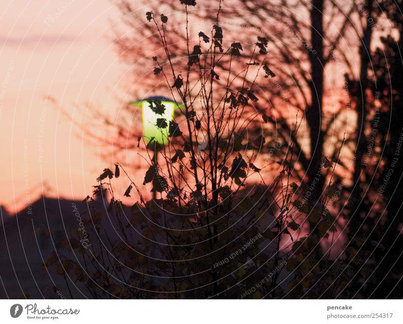 ein tag geht Himmel Baum Erholung Herbst Landschaft Garten Stimmung Energie Häusliches Leben Ende Dorf Müdigkeit Sonnenenergie Straßenbeleuchtung Abenddämmerung