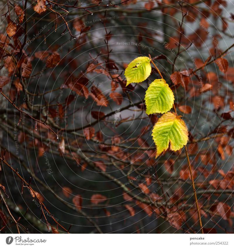 dreigestirn Natur Pflanze schön Baum Blatt Herbst Glück Stimmung Zusammensein Zufriedenheit Wassertropfen Lebensfreude 3 Zeichen Zusammenhalt Überraschung