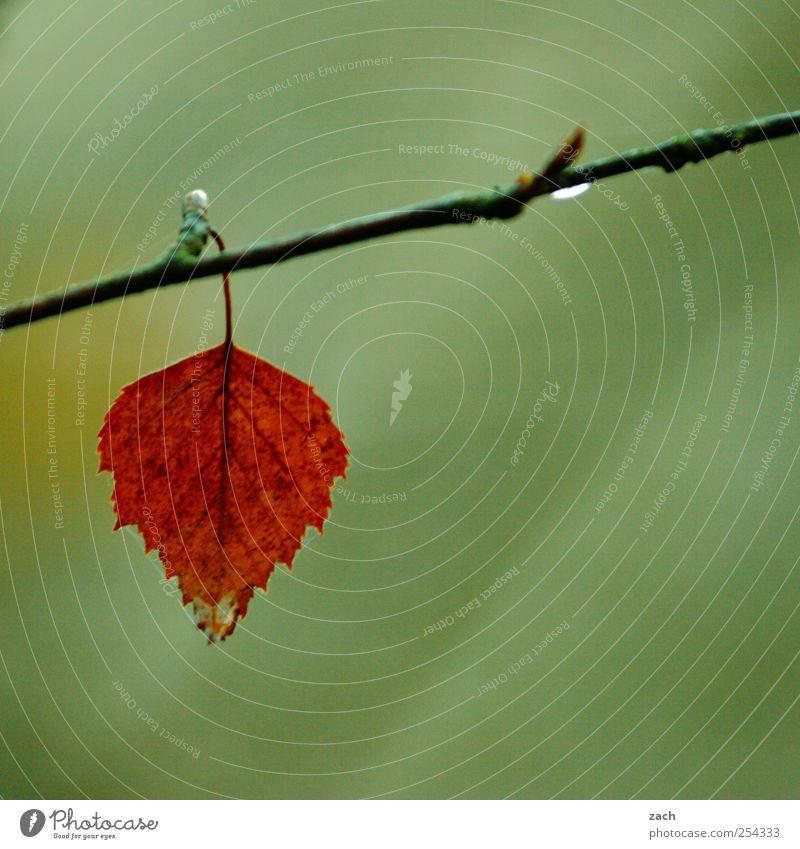 Herbst Natur Pflanze Wassertropfen schlechtes Wetter Nebel Regen Baum Blatt Ast Zweig Holz hängen verblüht braun grün rot Einsamkeit Farbe Traurigkeit