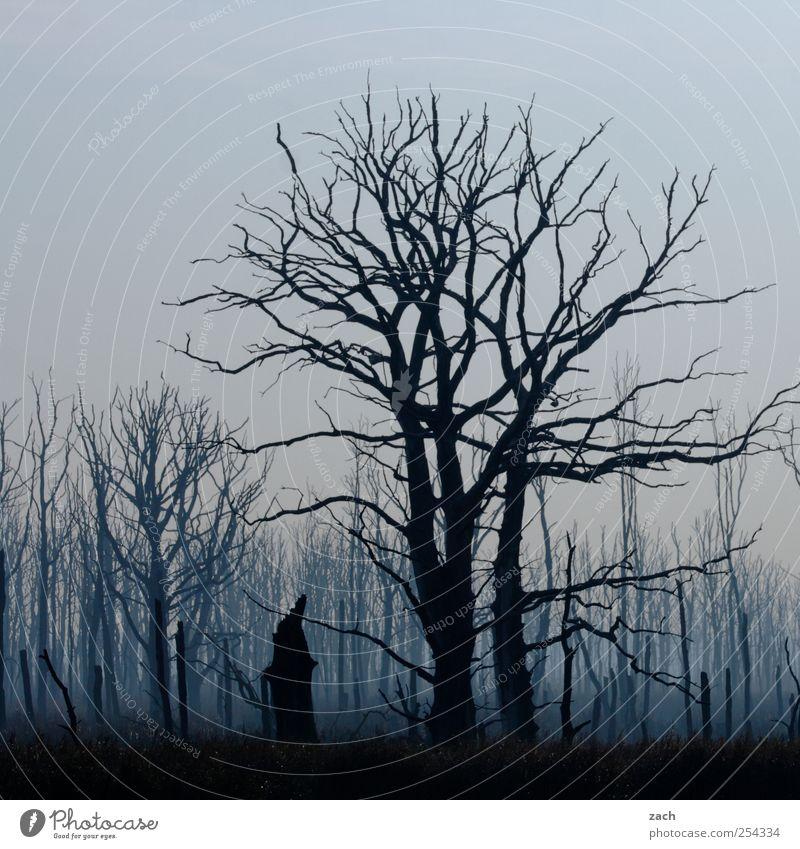 Herbst Umwelt Natur Landschaft Pflanze schlechtes Wetter Nebel Regen Baum Baumstamm Wald Holz bedrohlich dunkel blau schwarz Traurigkeit Einsamkeit Angst