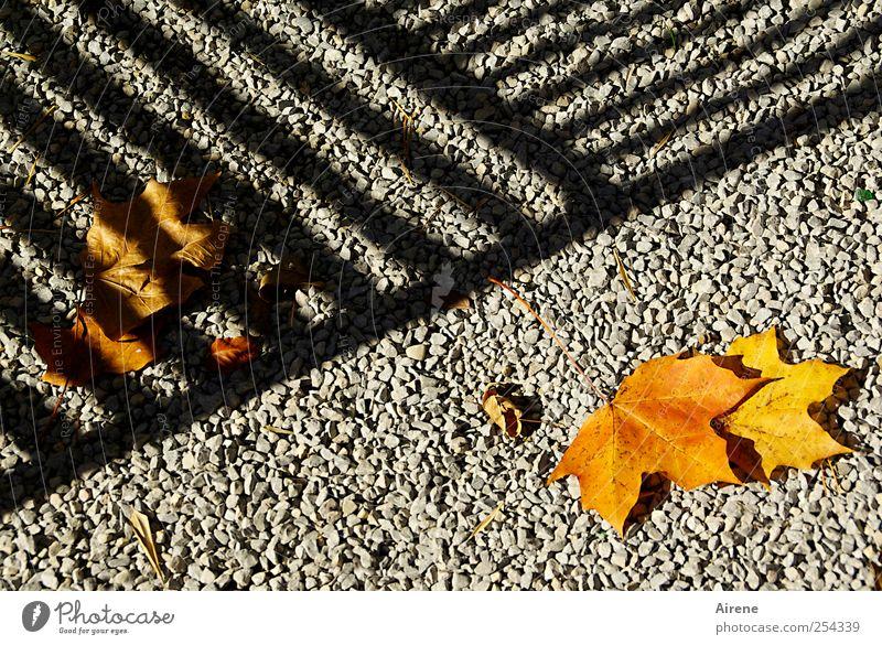 Diesseits und jenseits [CHAMANSÜLZ 2011] weiß Pflanze Blatt schwarz Ferne Herbst Wege & Pfade Stein Linie Zufriedenheit gold Ordnung liegen Streifen rein Grenze