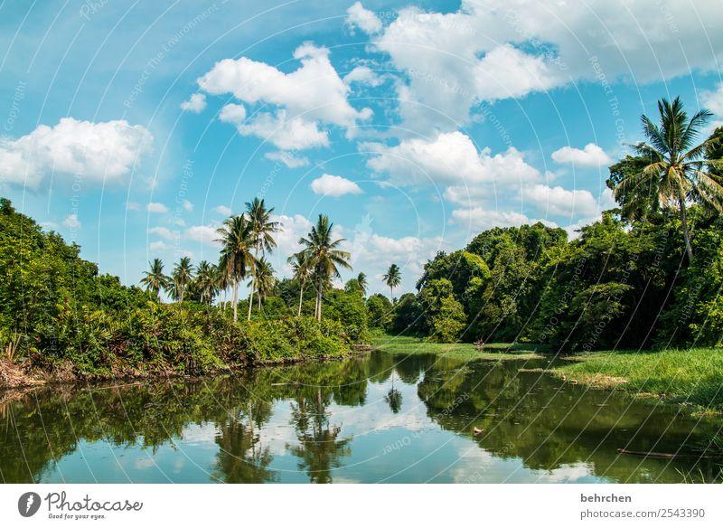 wenn träume leben Ferien & Urlaub & Reisen Tourismus Ausflug Abenteuer Ferne Freiheit Natur Landschaft Pflanze Baum Sträucher Palme Urwald Fluss Kota Bharu