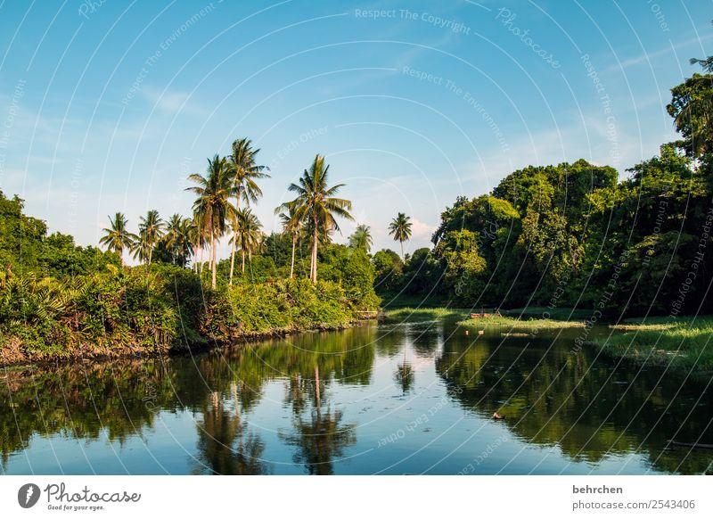 zur ruhe kommen Ferien & Urlaub & Reisen Tourismus Ausflug Abenteuer Ferne Freiheit Natur Landschaft Himmel Pflanze Baum Sträucher Palme Urwald Flussufer