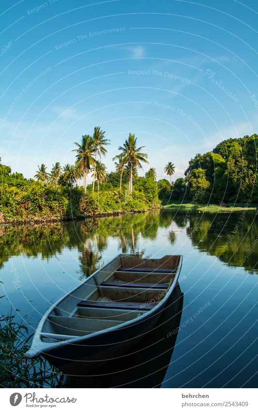 still|leben Ferien & Urlaub & Reisen Tourismus Ausflug Abenteuer Ferne Freiheit Natur Landschaft Pflanze Baum Sträucher Blatt Palme Urwald Flussufer Erholung