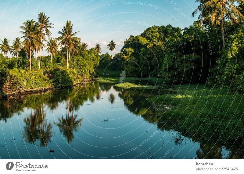 paradies Ferien & Urlaub & Reisen Tourismus Ausflug Abenteuer Ferne Freiheit Natur Landschaft Wasser Himmel Pflanze Baum Wald Urwald Flussufer Erholung genießen