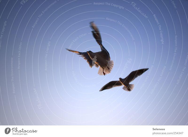Vogelfrei Ferien & Urlaub & Reisen Tourismus Ausflug Ferne Freiheit Meer Umwelt Natur Wolkenloser Himmel Schönes Wetter Küste Schifffahrt Tier Wildtier