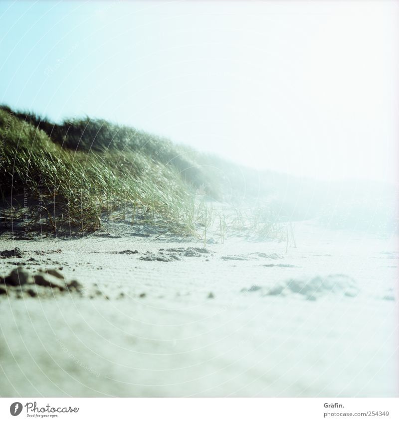 Am Strand Sand Wolkenloser Himmel Sonnenlicht Herbst Küste Stranddüne leuchten Ferne Unendlichkeit blau grün weiß Natur ruhig Ferien & Urlaub & Reisen hell