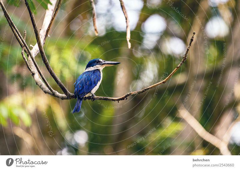 blaue schönheit Ferien & Urlaub & Reisen Natur Baum Tier Blatt Ferne Tourismus außergewöhnlich Freiheit Vogel Ausflug Wildtier Abenteuer Feder