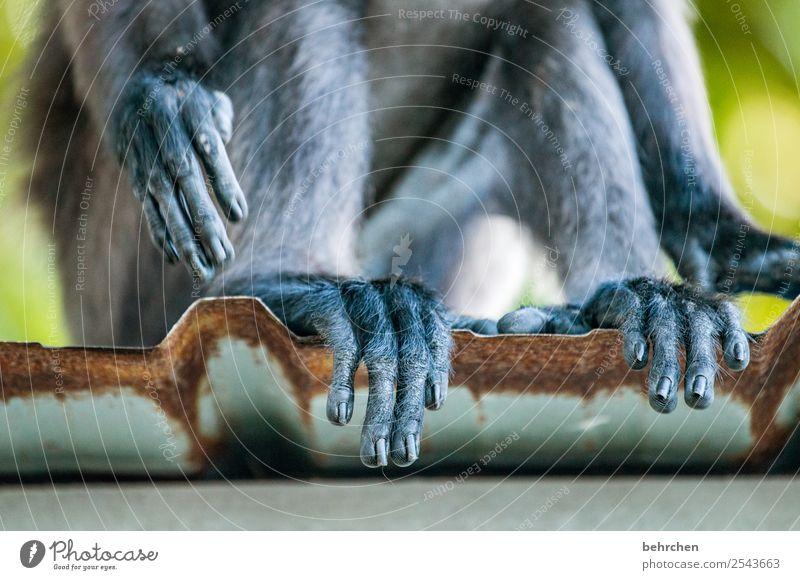 einmal pediküre bitte Ferien & Urlaub & Reisen Tier Ferne Tourismus Freiheit außergewöhnlich Ausflug Tierfuß Wildtier Abenteuer Asien Fernweh Fell exotisch