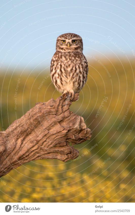 Natur Landschaft weiß Blume Tier natürlich Wiese klein Vogel braun wild stehen Feder niedlich Lebewesen Schnabel