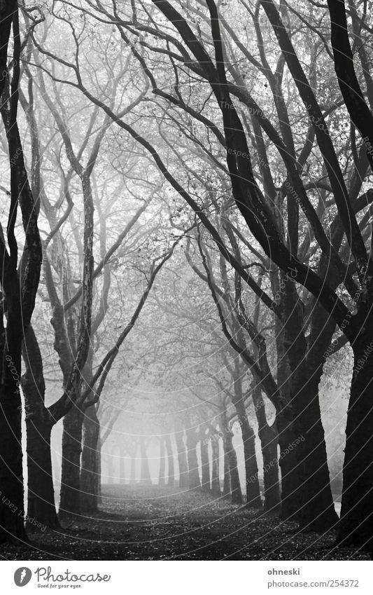 700 - Licht am Ende des Tunnels Natur Herbst schlechtes Wetter Nebel Baum Ast Allee schwarz weiß Traurigkeit Trauer Tod Müdigkeit Einsamkeit Erschöpfung Angst