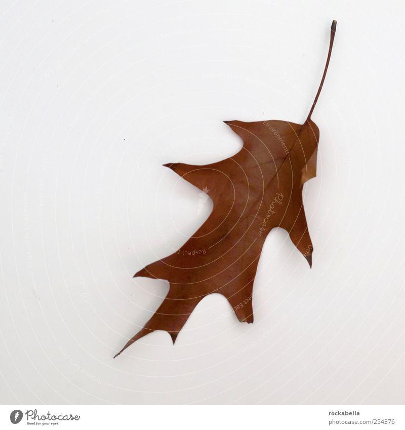 entropie II. Natur Pflanze Blatt Einsamkeit elegant ästhetisch Leichtigkeit