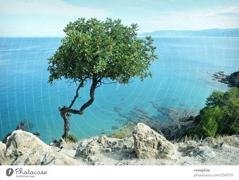 Zypern Himmel Natur blau grün Baum Sonne Ferien & Urlaub & Reisen Sommer Meer Strand ruhig Ferne Erholung Freiheit Landschaft Küste