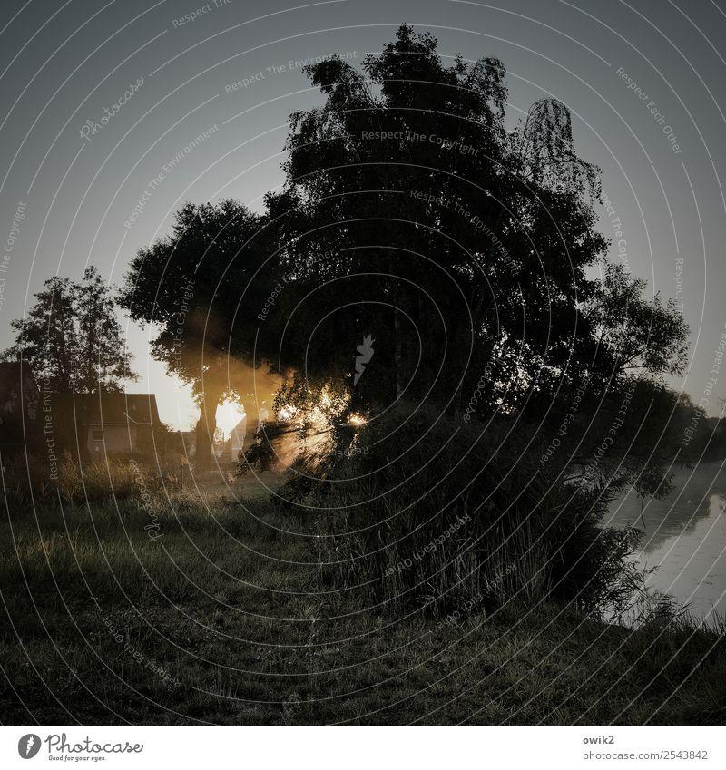 Alles auf Anfang Umwelt Natur Landschaft Luft Wasser Wolkenloser Himmel Horizont Schönes Wetter Baum Gras Sträucher Schilfrohr Röhricht Seeufer Dorf Haus
