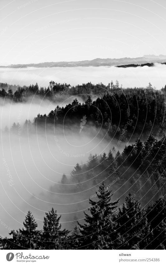 Fernsicht übers Nebelmeer und Wälder in Bern Natur weiß Baum ruhig schwarz Tier Wald dunkel Herbst Landschaft Berge u. Gebirge grau Traurigkeit Stimmung träumen