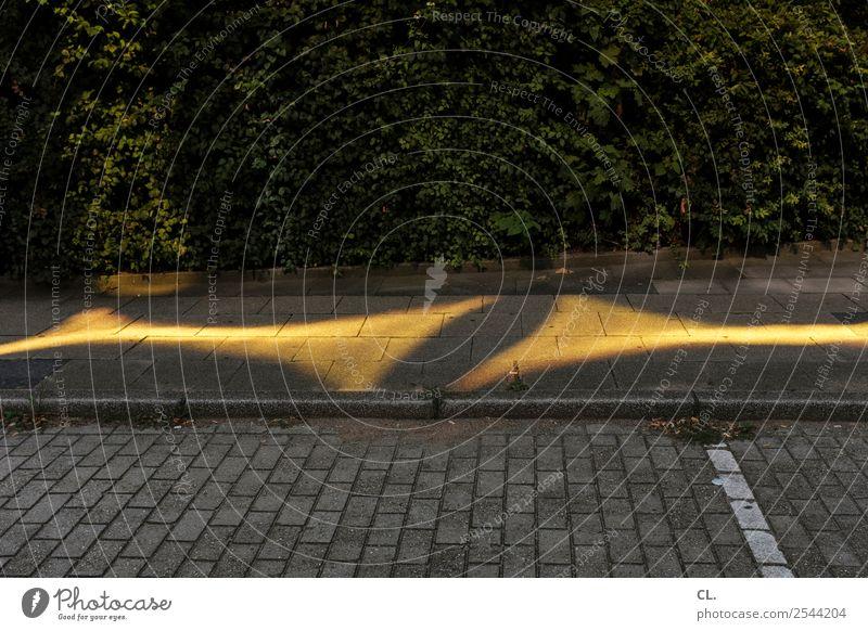 gelbes licht Straße Wege & Pfade außergewöhnlich ästhetisch Sträucher Inspiration Verkehrswege Lichtspiel Parkplatz Hecke