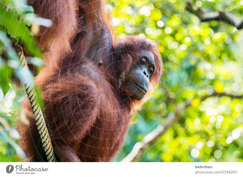 träumen Ferien & Urlaub & Reisen schön Tier Ferne Tourismus außergewöhnlich Freiheit Ausflug nachdenklich Wildtier Abenteuer fantastisch Asien Fernweh Fell