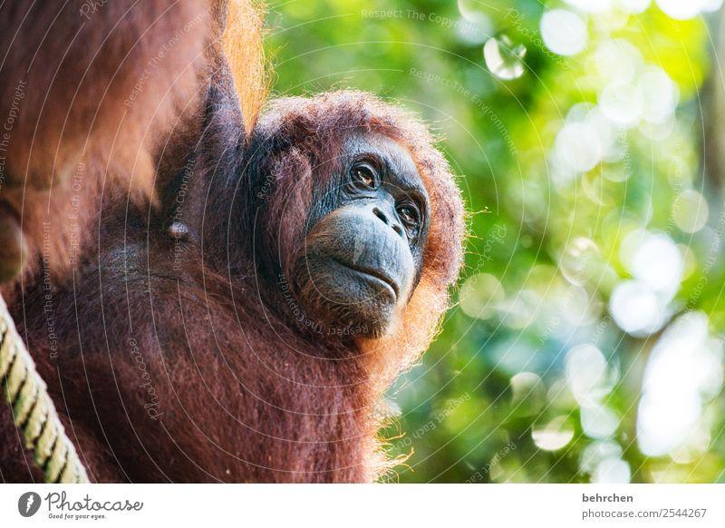 warum... | gedankenspiele Ferien & Urlaub & Reisen Baum Tier Blatt Ferne Tourismus außergewöhnlich Freiheit Ausflug nachdenklich Wildtier Abenteuer fantastisch