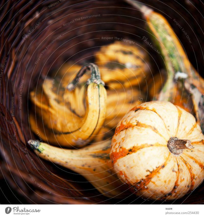 Kürbiskörbchen Lebensmittel Gemüse Bioprodukte Vegetarische Ernährung Gesunde Ernährung Erntedankfest Halloween Herbst authentisch natürlich braun Korb