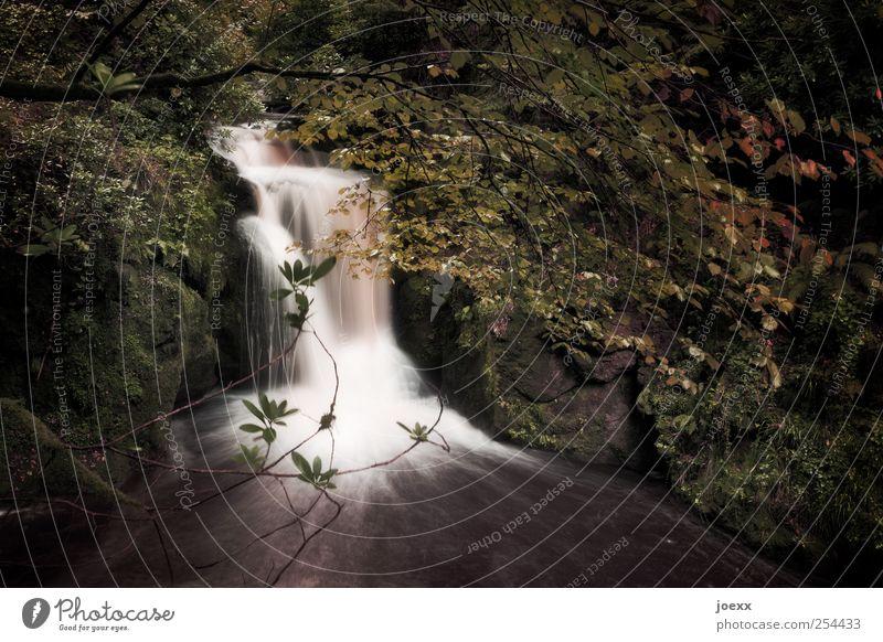 Unter der Brücke Natur Wasser Einsamkeit Wald Gefühle Kraft Beginn Romantik Idylle Bach Wasserfall