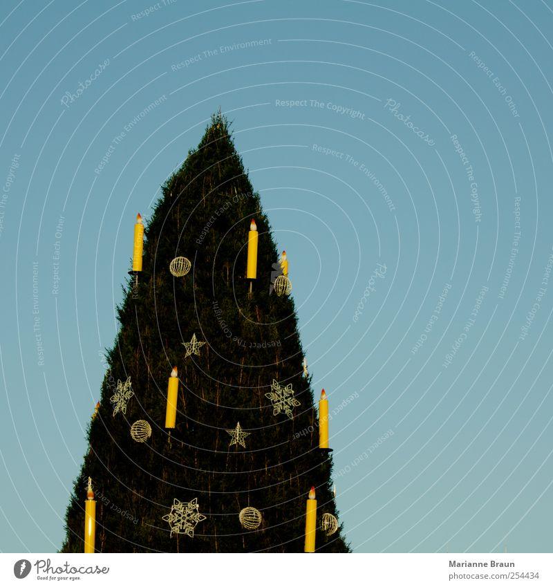 1000 in einem Himmel Weihnachten & Advent blau grün Baum Winter gelb Holz Feste & Feiern groß Stern (Symbol) Kerze Dekoration & Verzierung Spitze viele