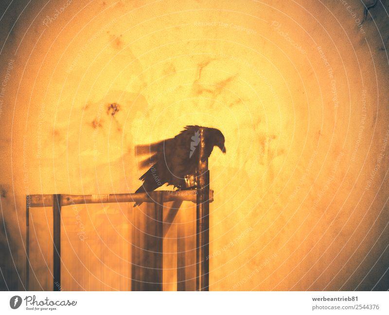 Tag des Rabenkunstwerks Design Dekoration & Verzierung Halloween Kunst Natur Tier Vogel Linie alt sitzen dunkel historisch wild gelb schwarz geheimnisvoll