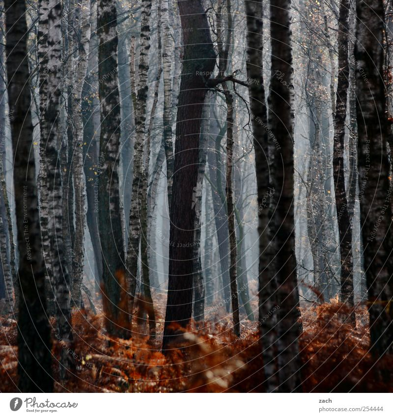 Herbst Natur weiß Baum Pflanze Wald dunkel Umwelt Landschaft Regen braun Nebel Baumstamm Verfall Dunst schlechtes Wetter