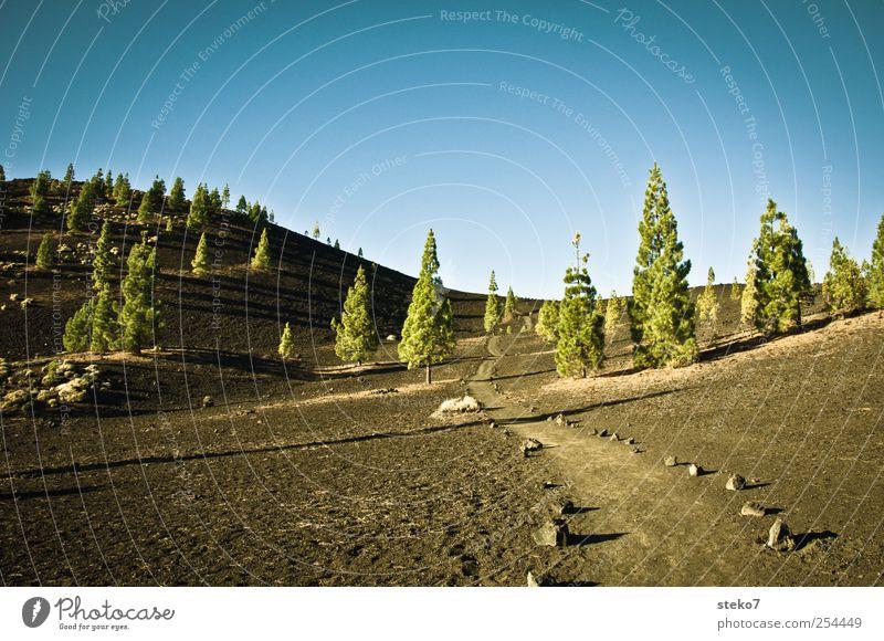 Welle blau grün Baum schwarz Wald Landschaft Wege & Pfade trocken Schönes Wetter Vulkan Wolkenloser Himmel karg Teneriffa Pinie Teide Lavafeld