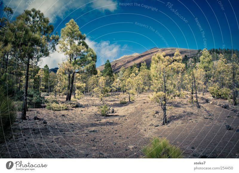 no grass land Himmel blau grün Wolken Wald Landschaft Wege & Pfade braun Felsen wandern trocken Gipfel karg Teneriffa Pinie Teide