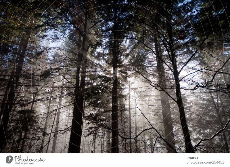 What the fog? Umwelt Natur Herbst Klima Baum Wald leuchten frisch Jahreszeiten Nebel Religion & Glaube Stimmung Erkenntnis mystisch Farbfoto Außenaufnahme