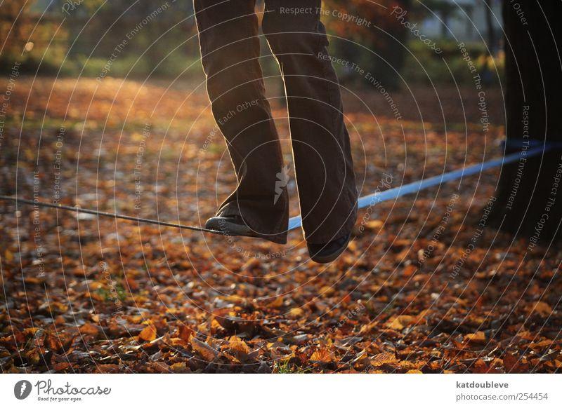 balance Natur Baum Blatt ruhig Herbst oben Bewegung Beine Fuß Park braun Zufriedenheit gold Freizeit & Hobby hoch Sicherheit