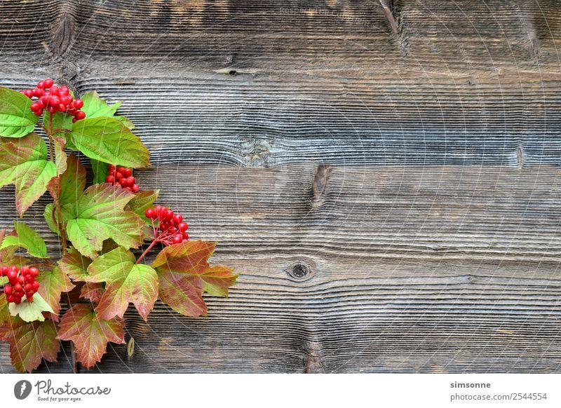 buntes Laub auf einem Holz Hintergrund Basteln Sommer Natur Pflanze Herbst Blume Blatt blau rot Hintergrundbild Beeren Viburnum Buche Dahlien buntfrüchte Ernte