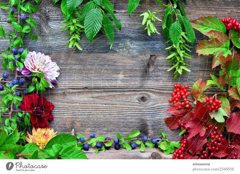buntes Laub und Dahlien Holz Hintergrund Basteln Sommer Natur Pflanze Herbst Blume Blatt blau rot Hintergrundbild Beeren Viburnum Buche buntfrüchte Ernte