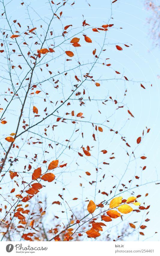 schwungvoll durch den Herbst harmonisch Erholung ruhig Meditation Erntedankfest Natur Pflanze Himmel Baum Sträucher Garten Park leuchten blau braun gelb